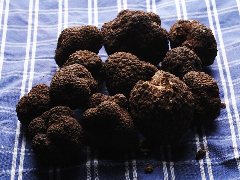 tartufo-nero-pregiato Force